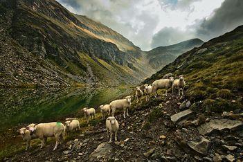 Balades fraîcheur, baignade en altitude et paysages de rêve