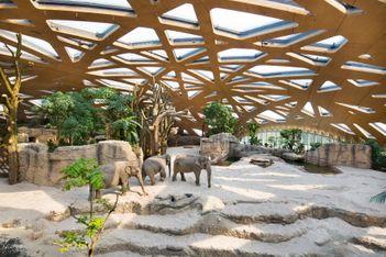 Les parcs animaliers et leurs animaux stars