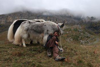 Chameaux, yaks, lamas... Cet été, redécouvrez la Suisse romande de façon originale dans le sillage de drôles de bêtes