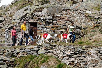 La Fondation Barryland vous offre une expérience en montagne unique en compagnie de leurs joyeux compagnons !