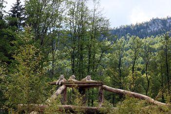 Pour votre prochaine visite en famille au célèbre parc zoologique  du Jura beronois, faites des économies en profitant de l'offre Railaway !