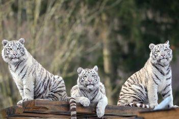 Pour votre prochaine visite en famille au célèbre parc zoologique  du Jura bernois, faites des économies en profitant de l'offre Railaway !