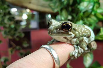 La plus grande exposition de reptiles d'Europe reprend ses quartiers à Fribourg. Serpentez entre les espèces à la rencontre de plus de 250 animaux.