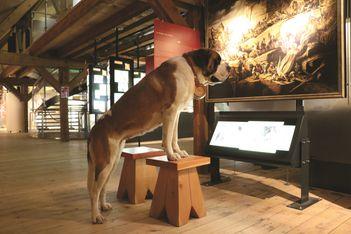 Pour la Nuit des Musées, Barryland a concocté une expo au poil, durant lequel vos enfants pourront côtoyer de près les chiens Saint Bernard !
