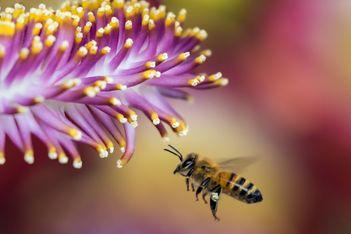 Contribuez à sauver les abeilles partout en Suisse romande