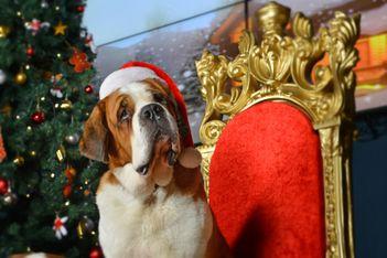 Pour Noël, -20% sur les bons cadeaux de Barryland