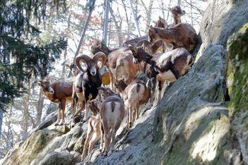 Saison des naissances au zoo de Marécottes