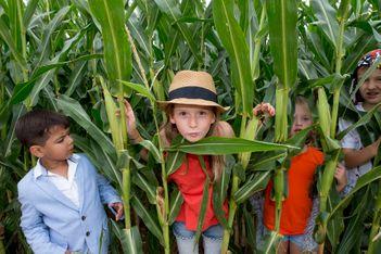 Du 10 juillet au 31 octobre 2021, nouvelle édition du labyrinthe de maïs signé Urba Kids