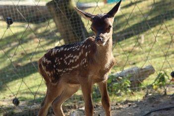 Parc animalier à Le Vaud