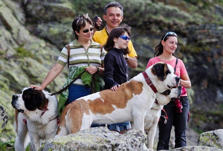 6 Balade d'été au Col du Grand St Bernard (c) Iris Kürschner, powerpress.ch.jpg