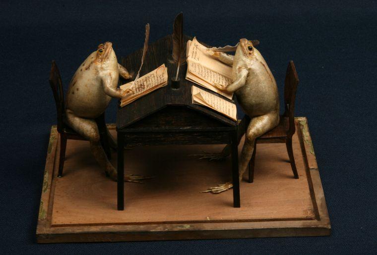 musee-estavayer-grenouilles-5.jpg