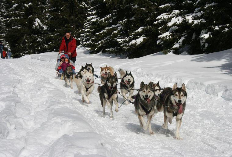 Tours en chiens de tra neaux activit for Balade chien de traineau doubs