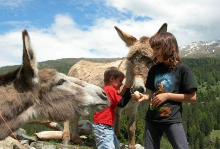 La Ferme à Cadichon à Grône (VS) propose des randonnées à dos d'âne.jpg