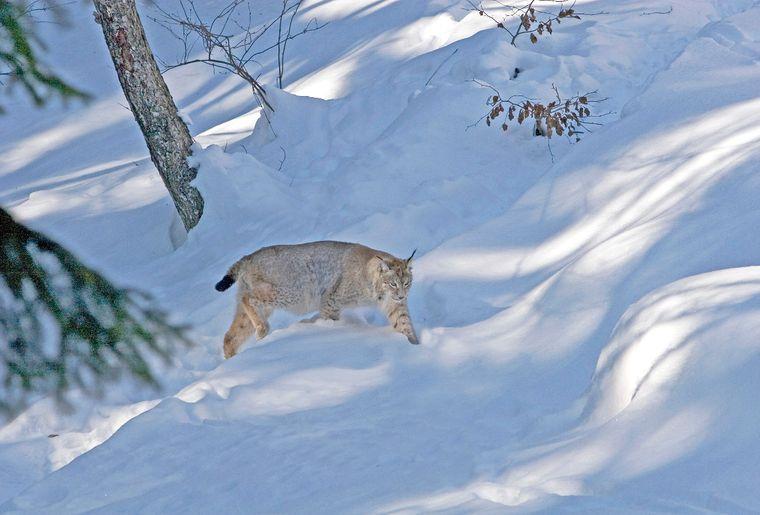 Lynxloisirs Chablais + Jura vaudois.jpg