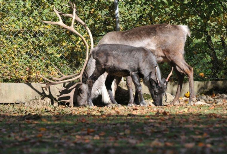 Rencontres bretagne rennes