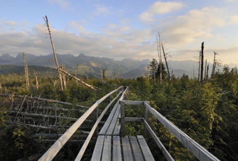 Naturpark Gantrisch 1 Gäggersteg.jpg