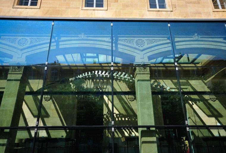 Muséum d'histoire naturelle de Neuchâtel 6.JPG