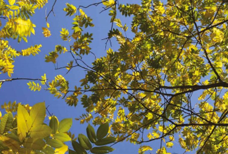 Balades insolites au fil des saisons dans le district de Nyon.PNG