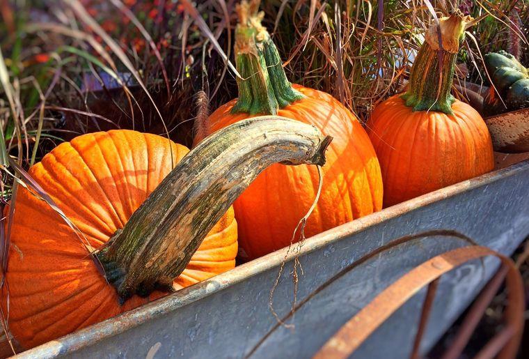 fall-950443_1920.jpg