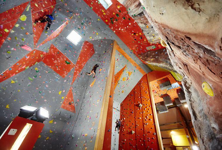 Gecko Escalade à Sottens.jpg