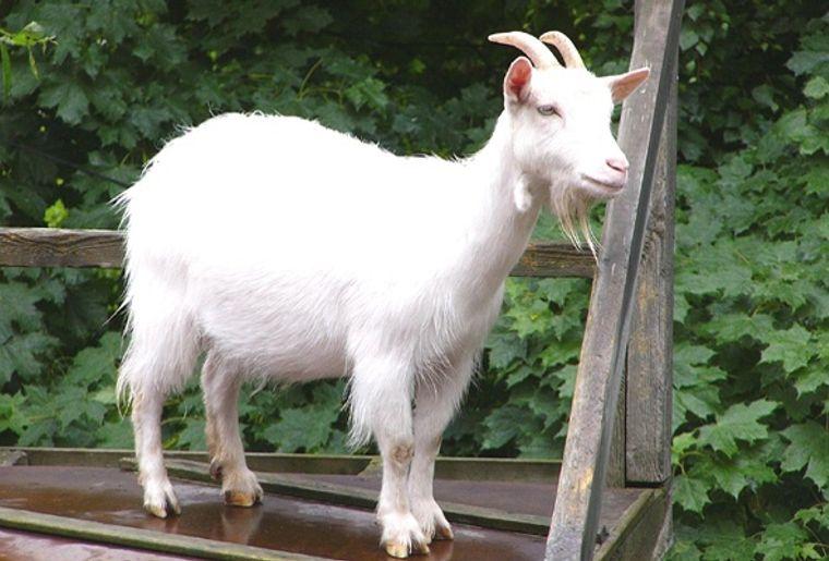 Parc zoologique Bienne 2.jpg