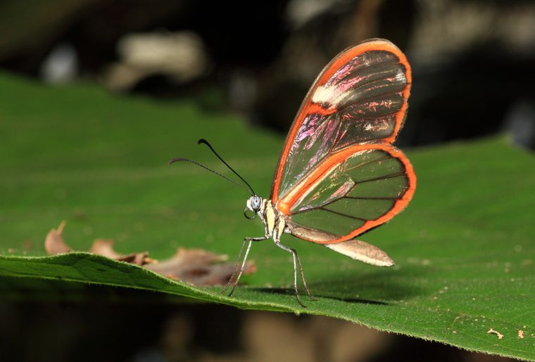 Papiliorama 8.jpg