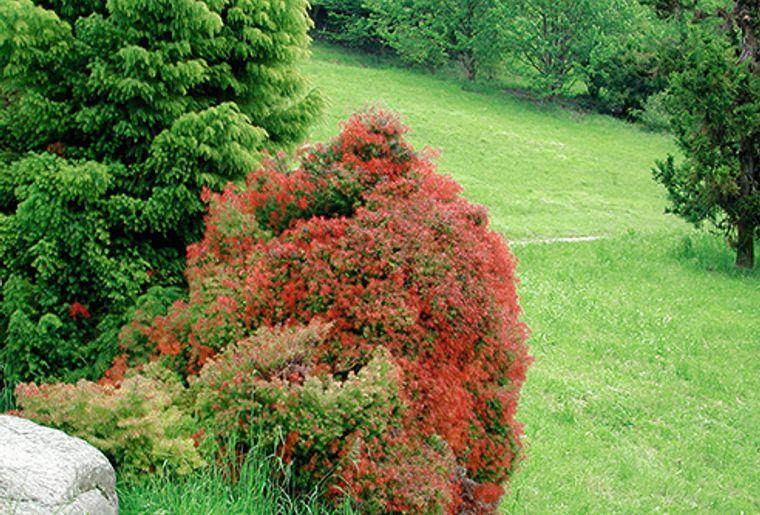 GRF_VD01_arboretum_01.jpg