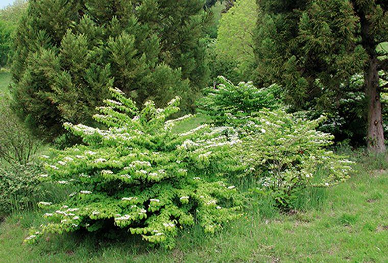 GRF_VD01_arboretum_02.jpg