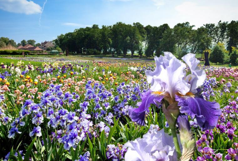 floralies-vullierens-iris-chateau.PNG