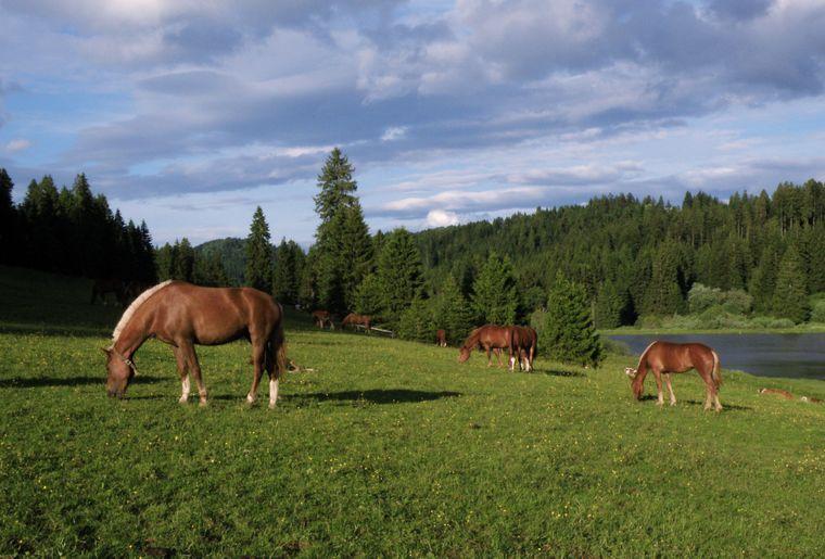 7 © République et Canton du Jura - Jura Tourisme.jpg