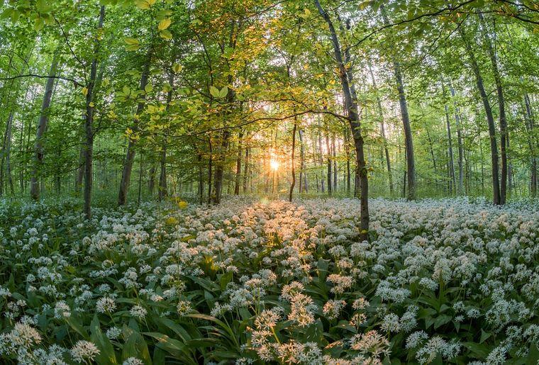 forest-811352_960_720.jpg