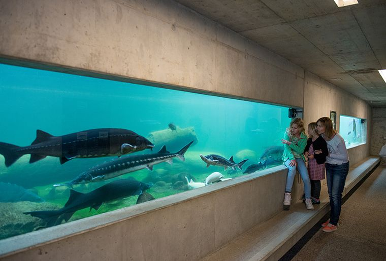 Aquarium-Familie.jpg