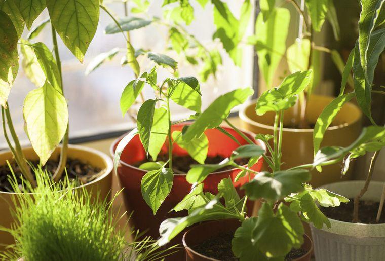 plante-lumiere-interieur.jpg
