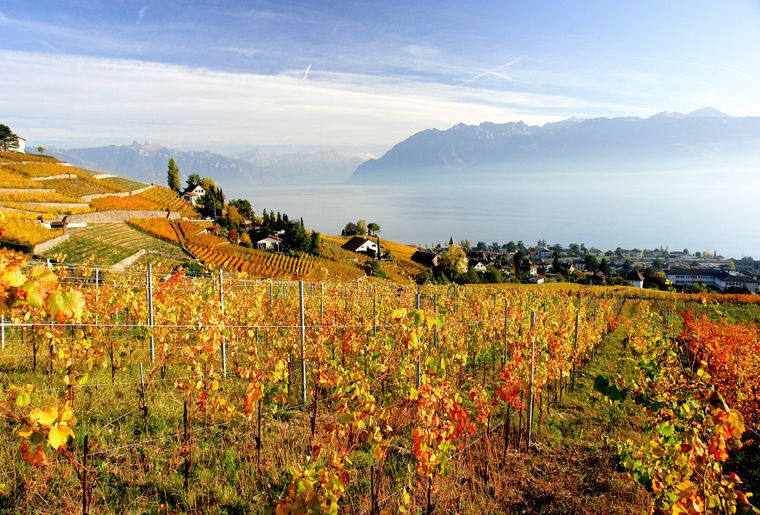 Vignoble en terrasses Lausanne Tourisme.JPEG
