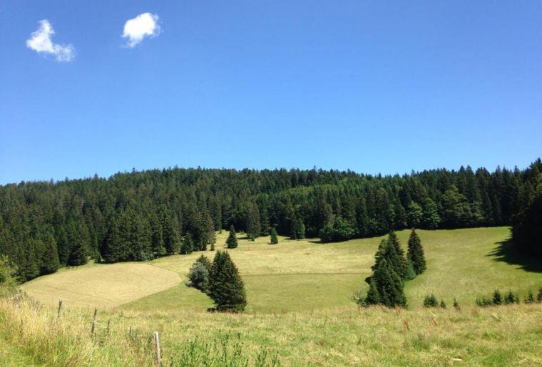 YverdonlesbainsRegion-forêt épicéas(c)Luca Perrenoud.jpg