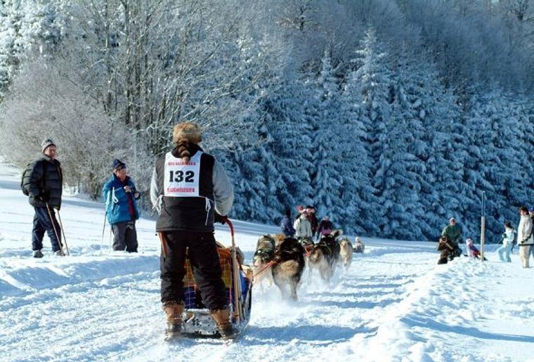 manifs_courses_chiens1.jpg