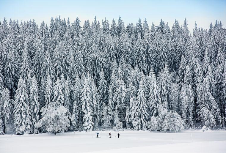 Parc du Doubs - L'appel de la forêt... -  Switzerland Tourism - swiss-image.chBAFUMarcus Gyger.jpg