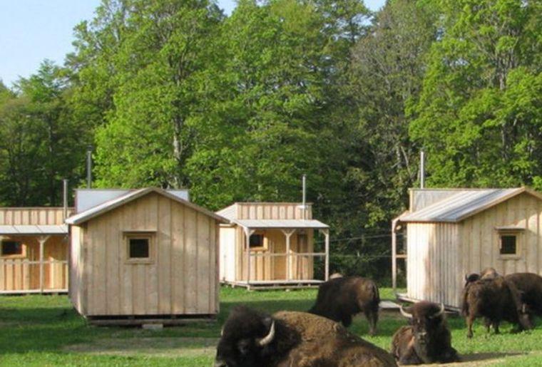 bison ranchwe.jpg
