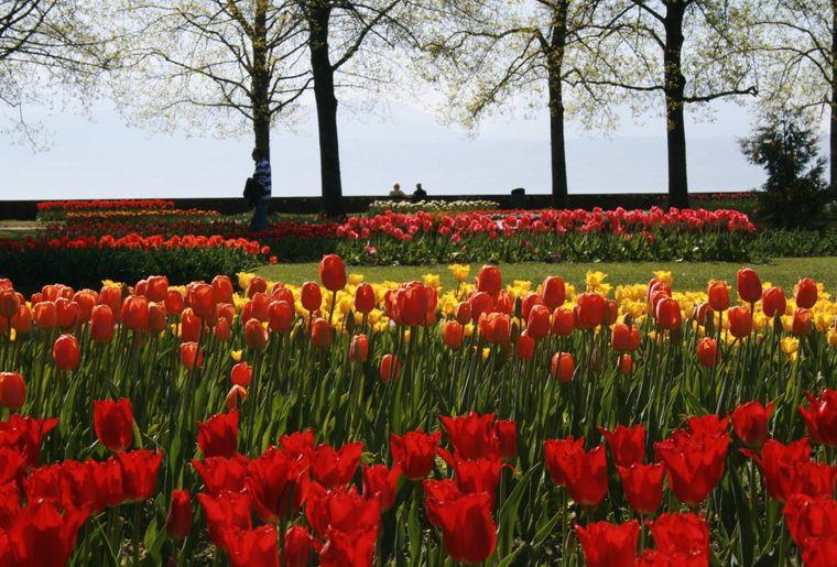 Fête de la Tulipe - Morges Région Tourisme.JPEG