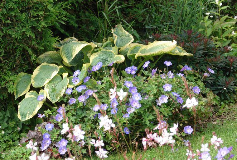Jardin n. Vuilliens Boulens (6).JPG