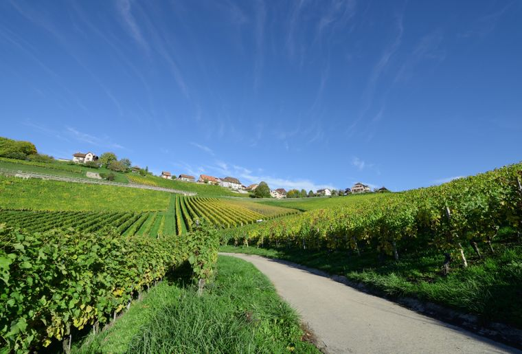 YlBR Orbe Vignoble Rances©Claude Jaccard www.vaud-.JPEG