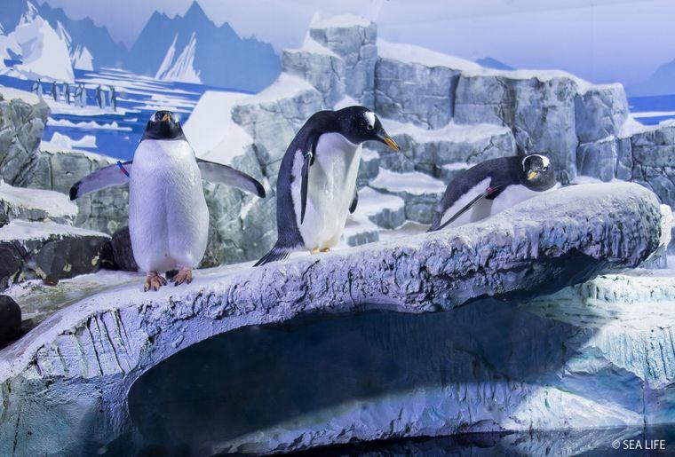 Pinguine_SEA LIFE.jpg