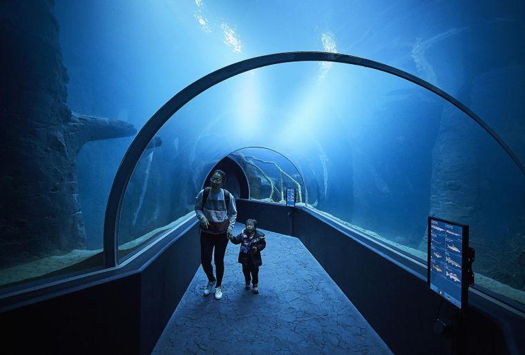 aquatis-aquarium-tunel-lausanne.JPEG
