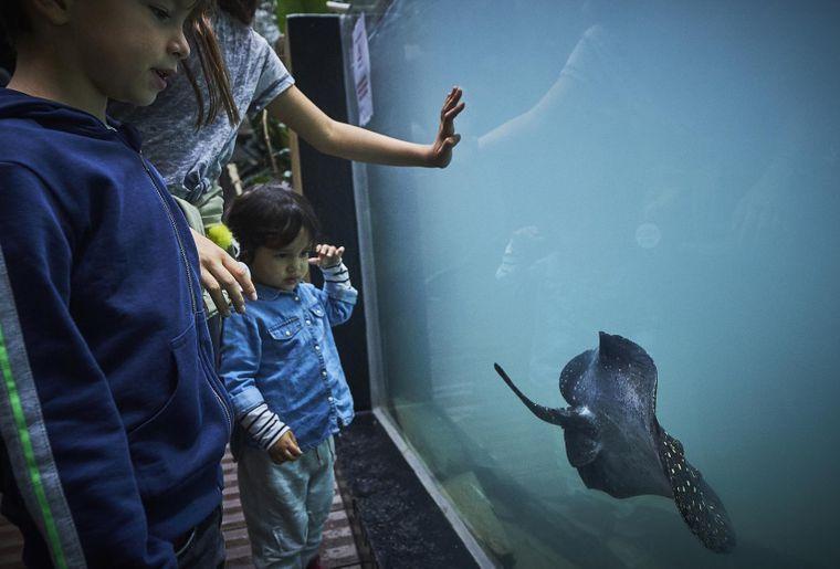 aquatis-aquarium-lausanne.JPEG