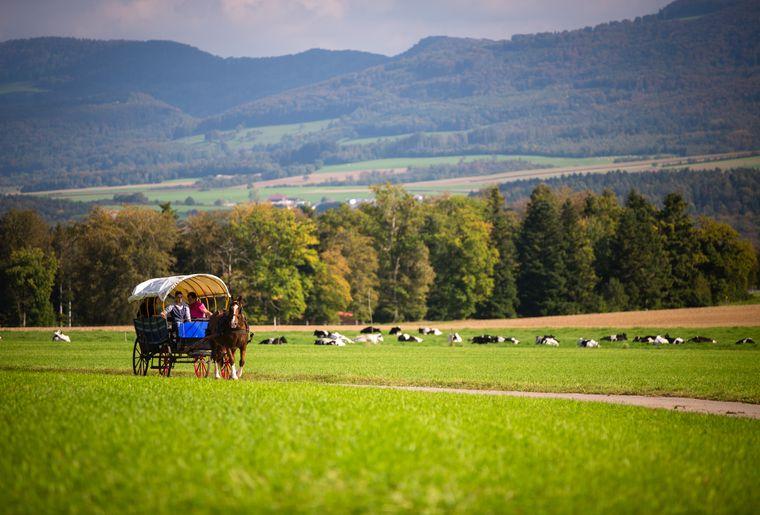Tourisme équestre dans le Jura