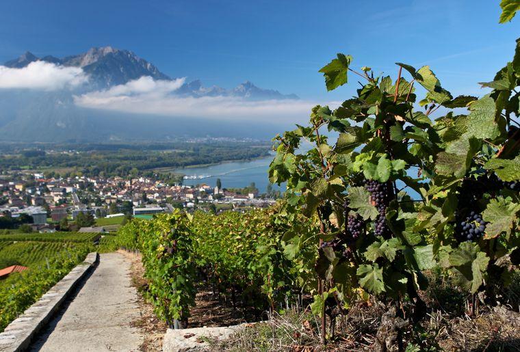 Sentier des vignes 2.JPEG