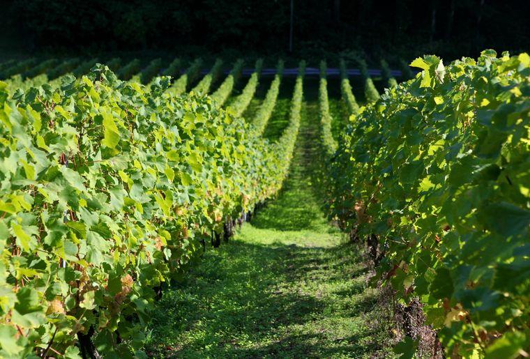 Sentier des vignes.JPEG