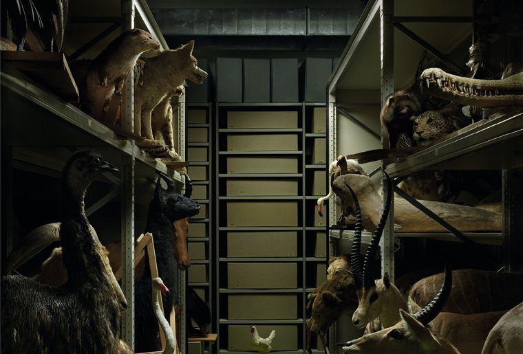Réserves du musée de zoologie, photo Régis Golay.jpg