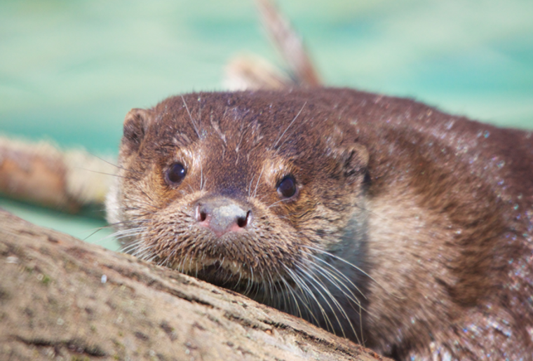 loutre01.png