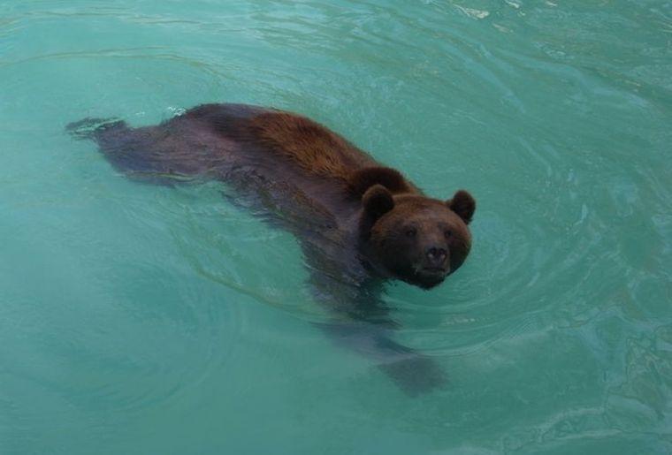 parc-ours-berne-1.jpg